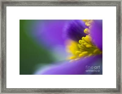 Pulsatilla Framed Print by Silke Magino