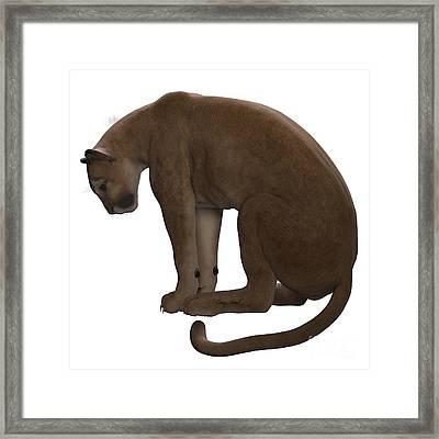 Puma Sitting Framed Print