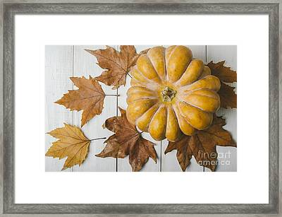 Pumkin And Maple Leaves Framed Print