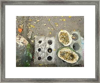 Pumkin Framed Print