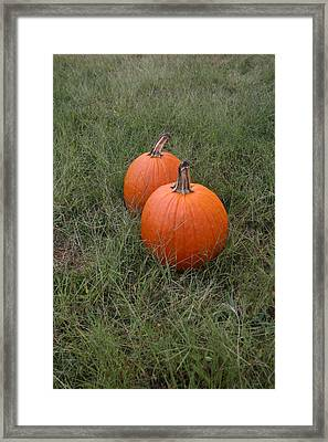Pumkin Couple Framed Print by Dennis Curry