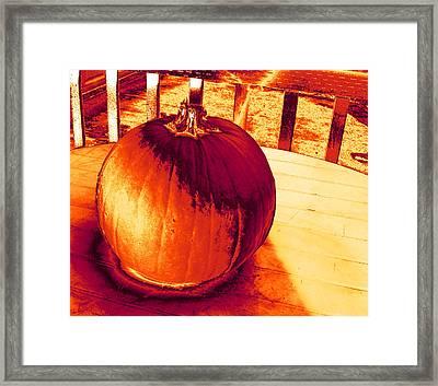 Pumpkin #3 Framed Print