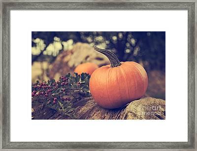 Pumpkin Framed Print by Amanda Elwell