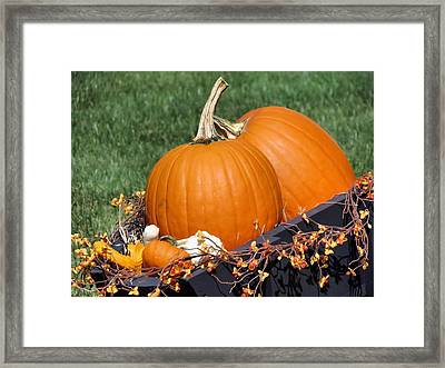 Pumpkin And Bittersweet Framed Print