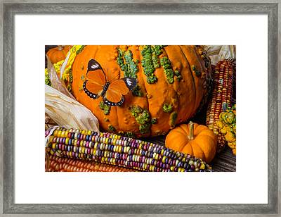 Pumpkin And Butterfly Framed Print by Garry Gay