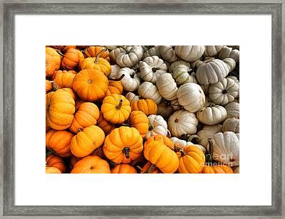 Pumpkin And Pumpkin Framed Print by Olivier Le Queinec