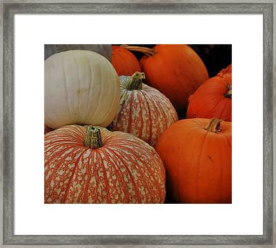 Pumpkin Colors Framed Print by JAMART Photography