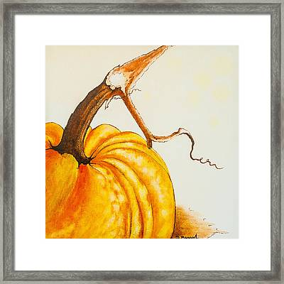 Pumpkin Framed Print by Dawn Broom