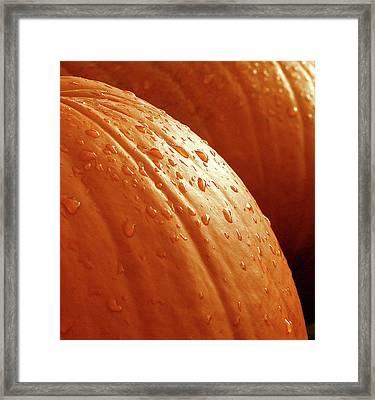 Pumpkin Dew Framed Print