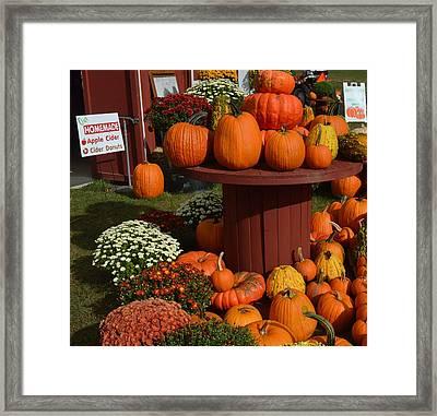 Pumpkin Display Framed Print