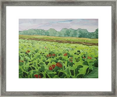 Pumpkin Field Framed Print by Bethany Lee