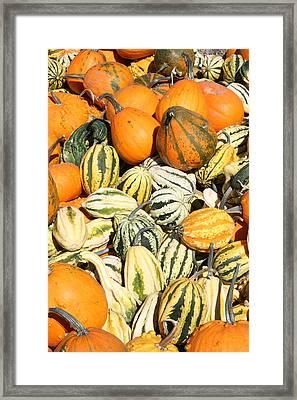 Pumpkin Field Framed Print by Patt Nicol