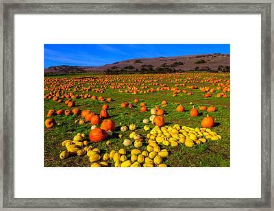Pumpkin Field Santa Cruz Framed Print