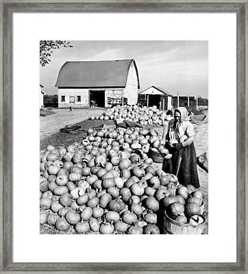 Pumpkin Harvest Framed Print by American School