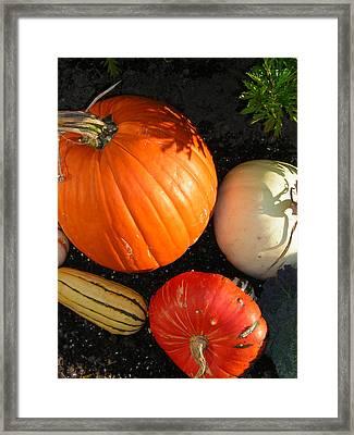 Pumpkin Framed Print by Heather Weikel