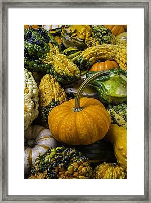 Pumpkin In The Gourds Framed Print by Garry Gay