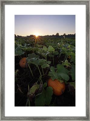 Pumpkin Patch Framed Print by Aaron J Groen