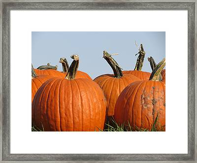 Pumpkin Patch II Framed Print by Kyle West