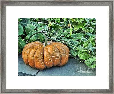 Pumpkin Patch Framed Print by Joan Minchak