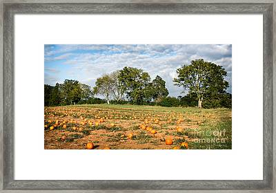 Framed Print featuring the photograph Pumpkin Patch by Todd Blanchard
