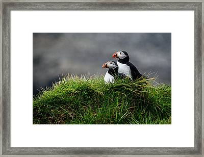 Pumpkin Framed Print by Ralf Kayser