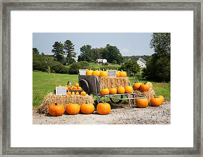 Pumpkin Sale Framed Print by Jane Rix