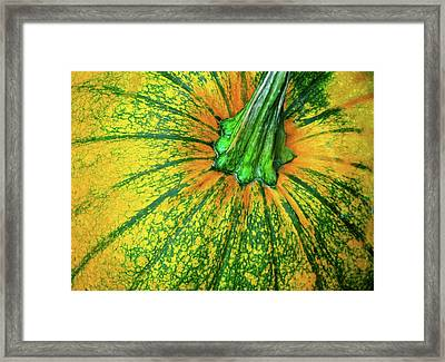 Pumpkin Season Framed Print by JAMART Photography