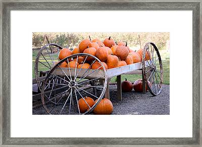 Pumpkin Spice Framed Print by Lornna Nunez