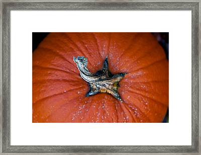 Pumpkin Stalk Framed Print