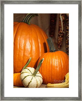 Pumpkins And Gourds Still Life Framed Print by Oleksiy Maksymenko