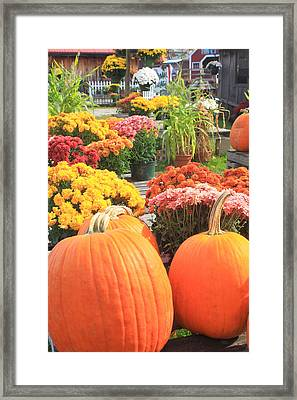 Pumpkins And Mums In Farmstand Framed Print by John Burk
