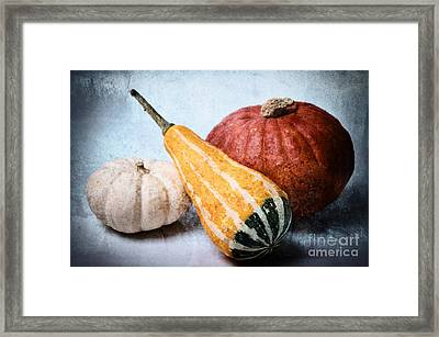 Pumpkins Framed Print by Angela Doelling AD DESIGN Photo and PhotoArt