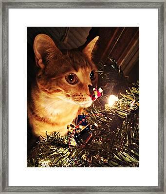Pumpkin's First Christmas Tree Framed Print by Kathy M Krause