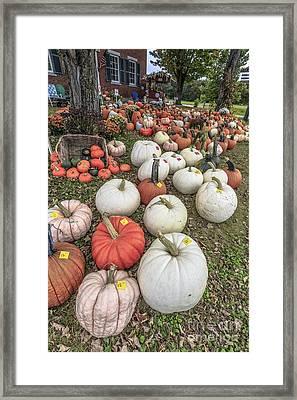 Pumpkins For Sale Framed Print by Edward Fielding