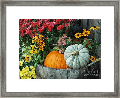 Pumpkins In Vermont Framed Print