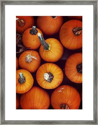 Pumpkins Framed Print by JAMART Photography