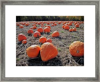 Pumpkins Of An Imperfect World Framed Print