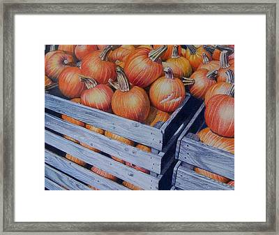 Pumpkins Two Framed Print by Constance Drescher