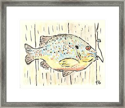 Pumpkinseed Sunfish Framed Print by Matt Gaudian