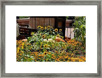 Pumplin Patch Framed Print by John Black