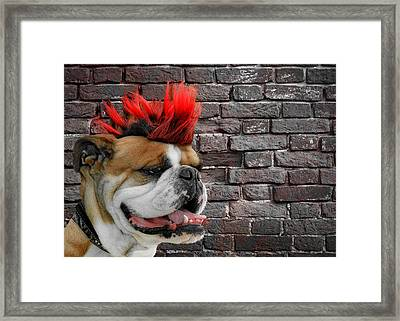 Punk Bully Framed Print by Christine Till
