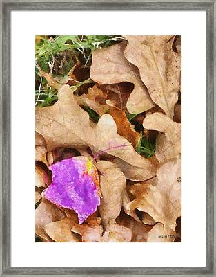 Punk Leaf Framed Print by Jeff Kolker