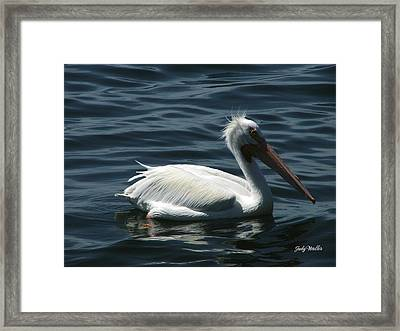 Punk Pelican - Side View Framed Print by Judy  Waller