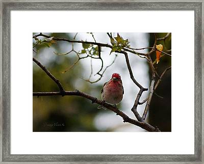 Punk'd Red Pol Framed Print