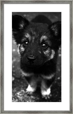 Pup Framed Print by Christopher Lugenbeal