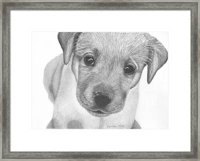 Pup Framed Print by Sue Olson