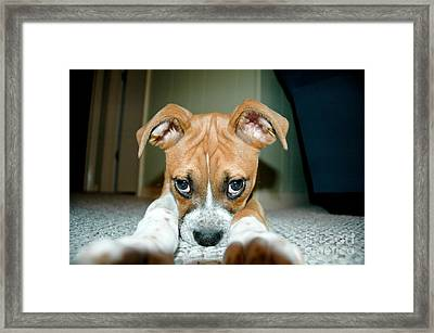 Puppie Dog Eyes Framed Print