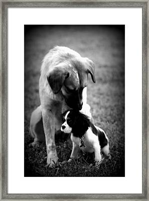 Puppies Framed Print by Susie Weaver