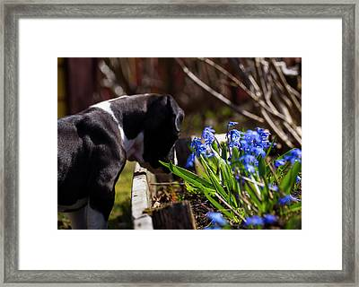 Puppy And Flowers Framed Print