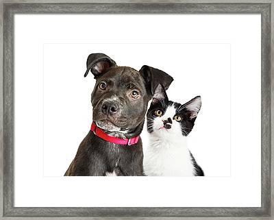 Puppy And Kitten Closeup Over White Framed Print by Susan Schmitz